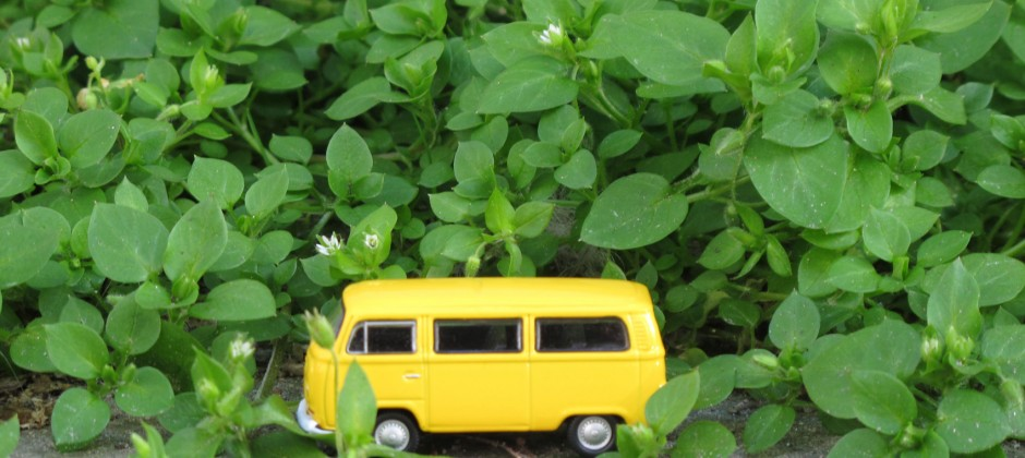 My yellow VW bus
